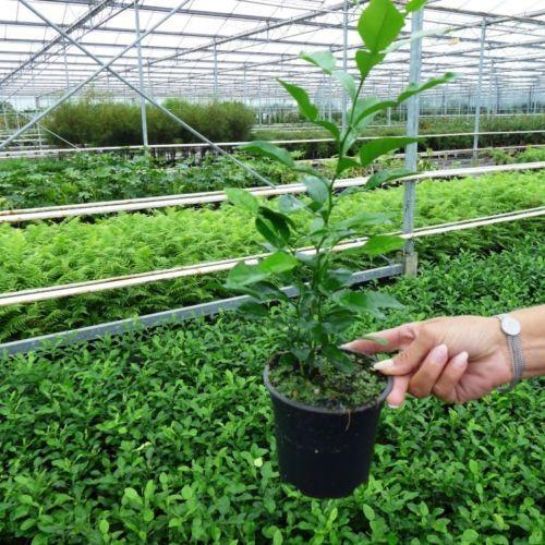 Pflanzenquelle